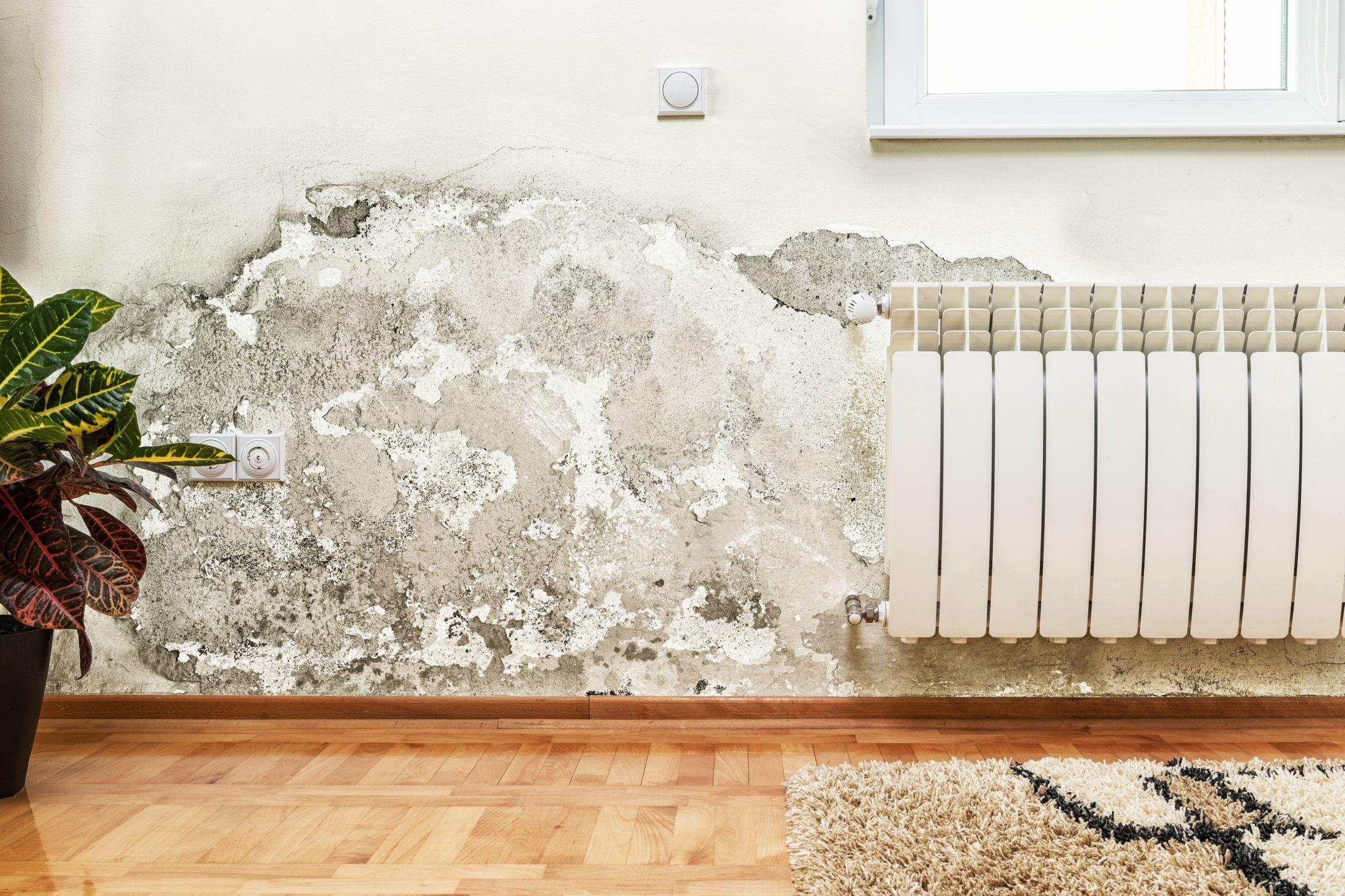 Jak uniknąć grzybów i pleśni w mieszkaniu?